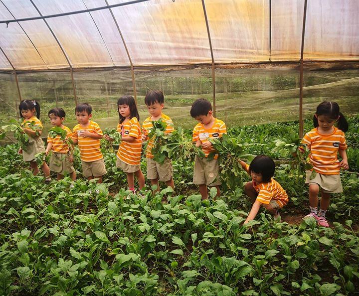 nông trại ở Singapore
